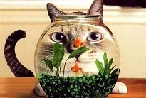 Cat looking at fish in a fish bowl